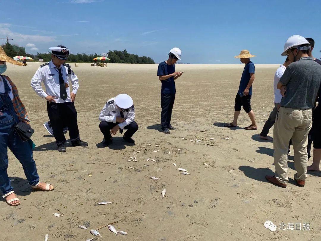 银滩景区连续多日有死亡鱼群被冲上沙滩,北海多部门已联合开展调查