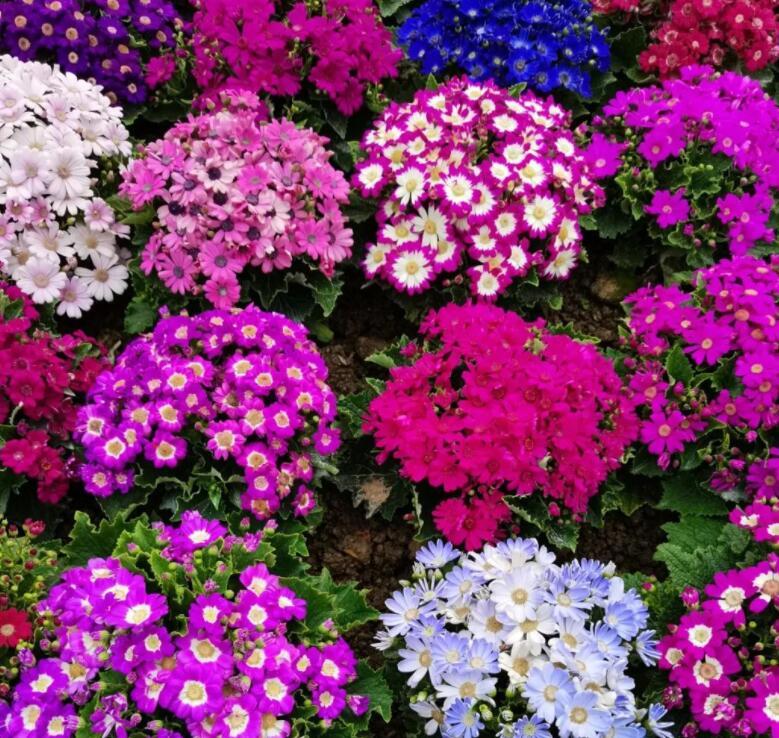 """就地过年好去处 南宁各大桑拿公园鲜花盛开""""满园春色"""""""